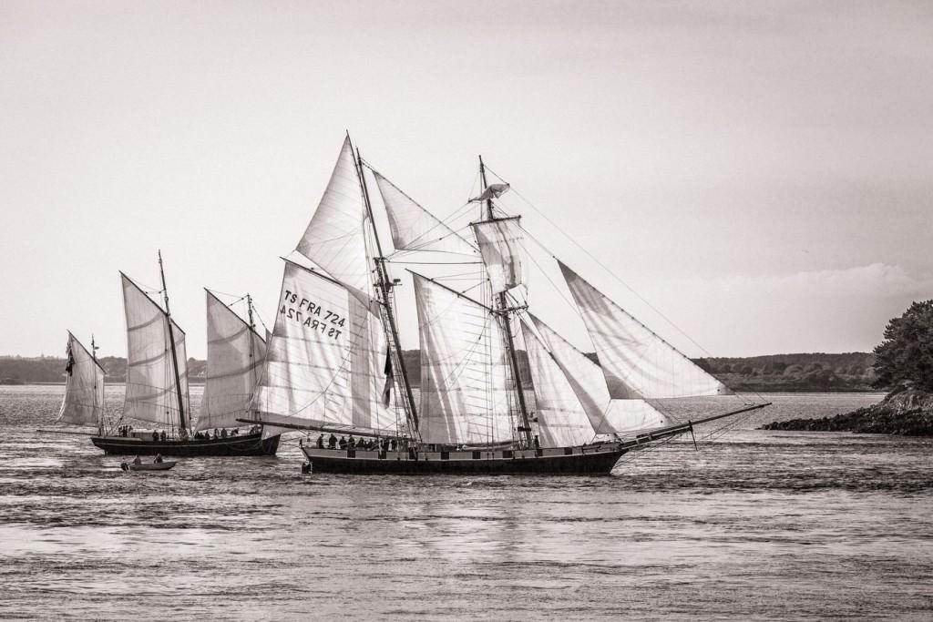 Petite parade de la semaine du Golfe du Morbihan