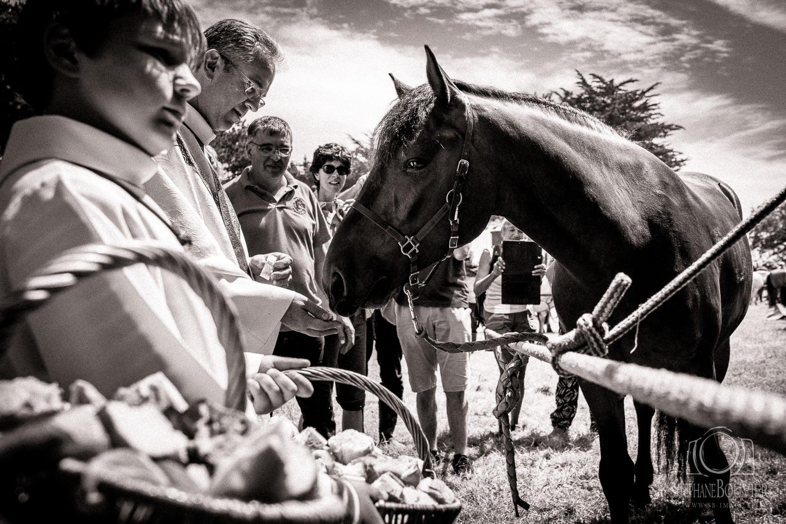 Pardon aux chevaux sur l'île de Saint-Gildas